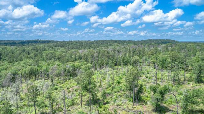 Gazley Hills Ranch - Bastrop County - Land for Sale Gazley Hills Ranch outskirts Smithville Texas