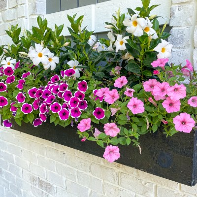 The Cheapest Way to Make a Flower Box