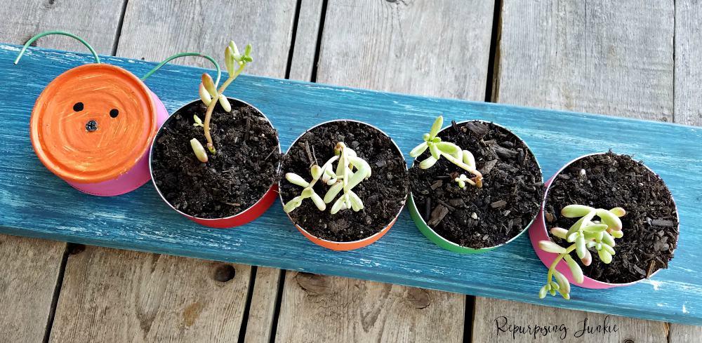 Repurposed Tuna Cans into Caterpillar Succulent Planter