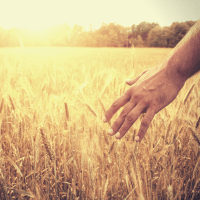 Celebrating Lammas - why the Celtic Harvest Festival is still so relevant today!