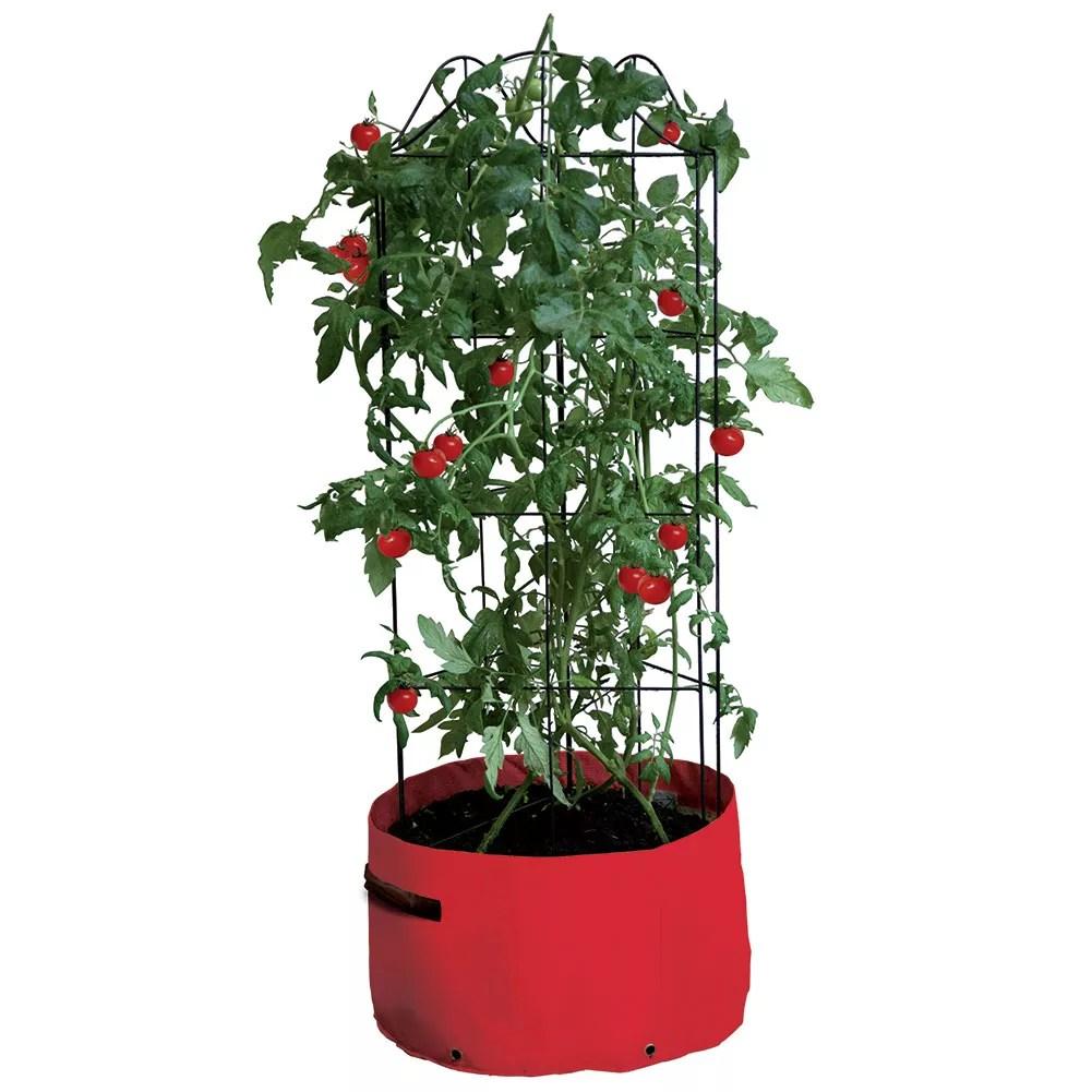 Climbing Tomato Patio Planter