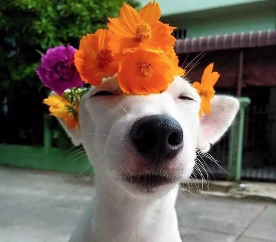 10 Photos of Animals Wearing Flower Crowns to E