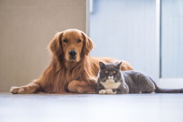 Apartment Living With Pets The Ers Willing To Pay A Premium For Their Animals