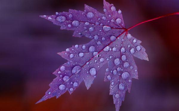 Leaves Rain Mac Wallpaper