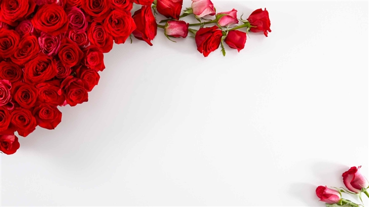 Plain White Wallpaper Iphone X Red Roses On White Background Mac Wallpaper Download