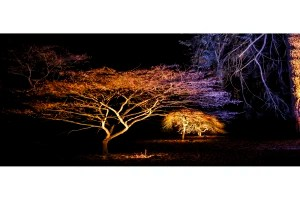 illuminated tree greetings card linking to Etsy store