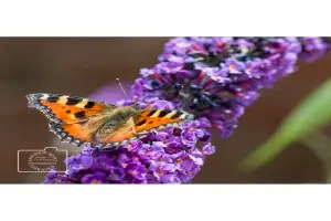 butterfly on a flower greetings card linking to Etsy store to buy