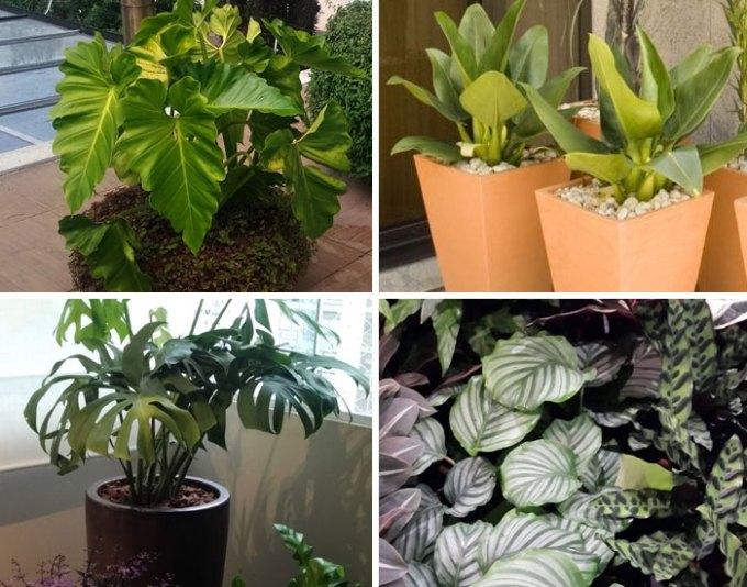 Plantas nativas em ambientes internos