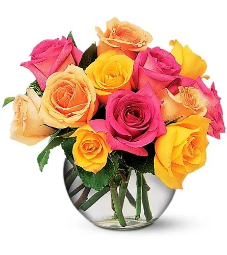 multi colored roses in