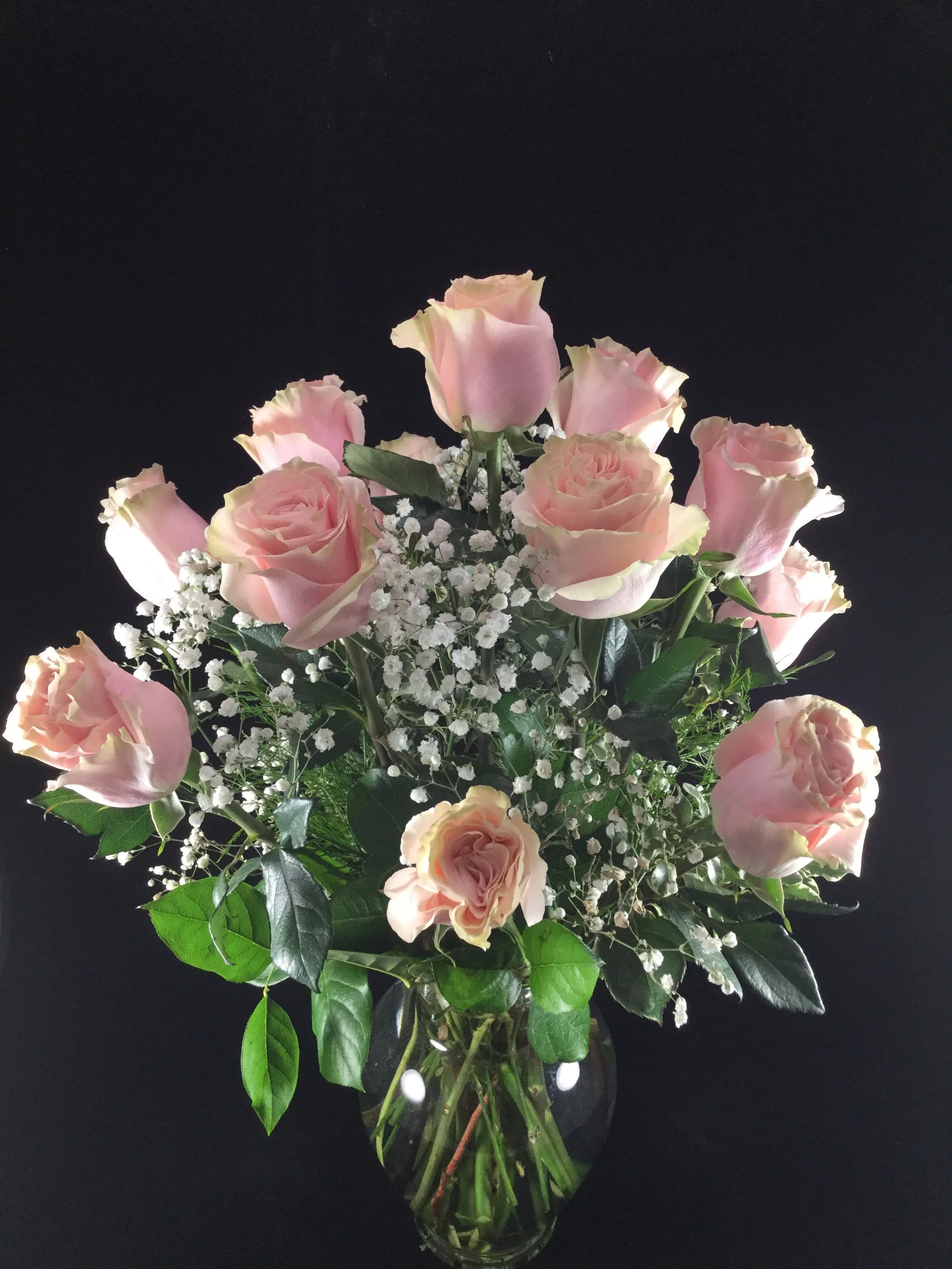 pretty pink rose in