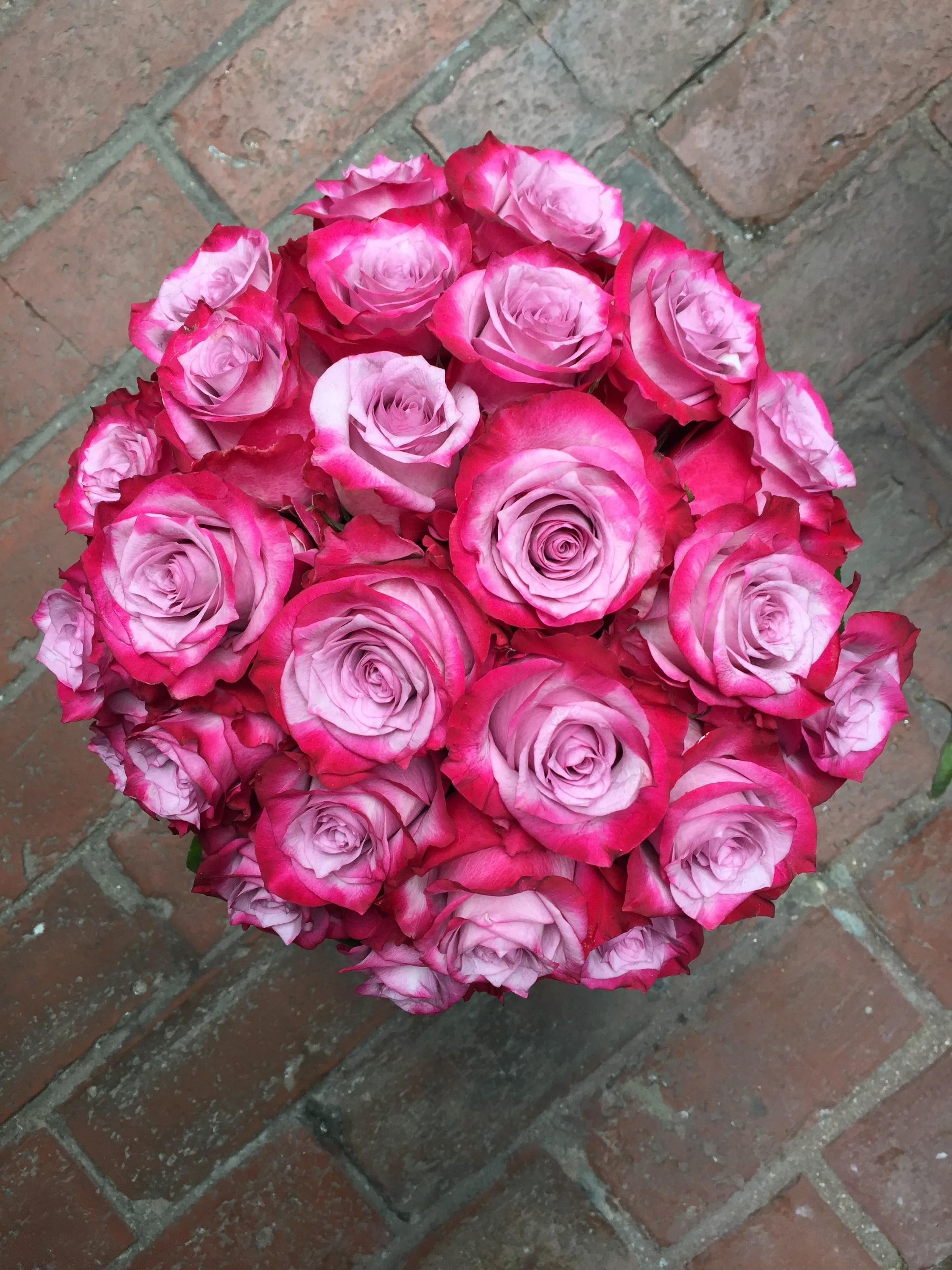 deep purple roses galore
