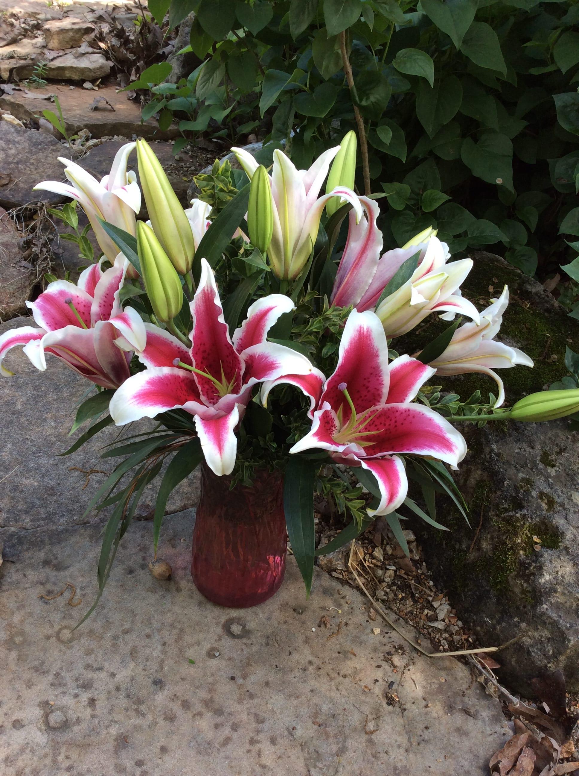 pink stargazer lilies in