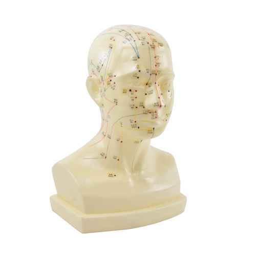 ?Acupuncture Head? Model