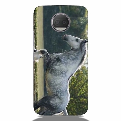 Grey Clydesdale Motorola G5s Plus Back Cover
