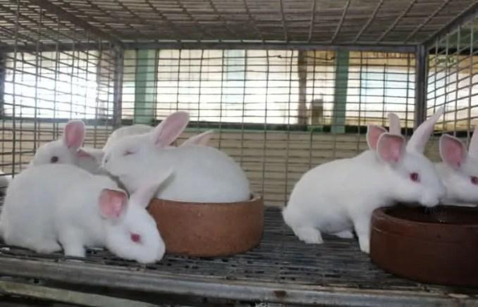 Rabbit Farming In Ghana