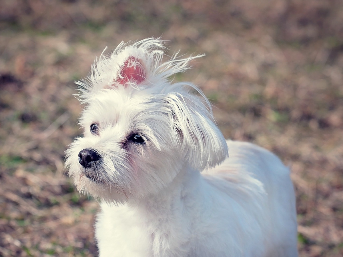 The 11 best places to pamper your pet in Dallas  CultureMap Dallas