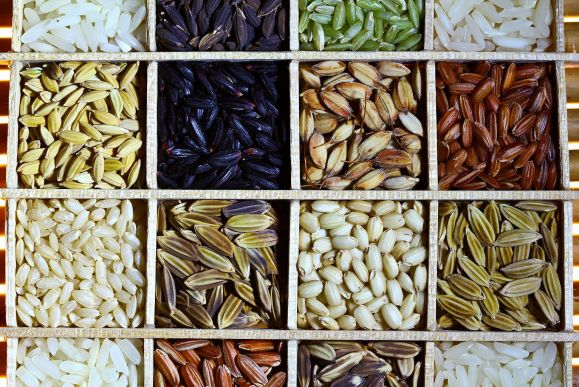 1024px-Rice_diversity_2_iuxkhd