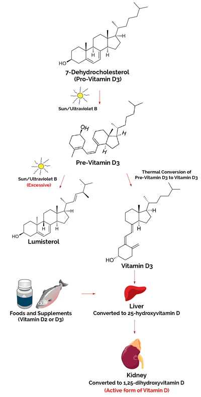 Difference Between Vitamin D From The Sun And Your Diet
