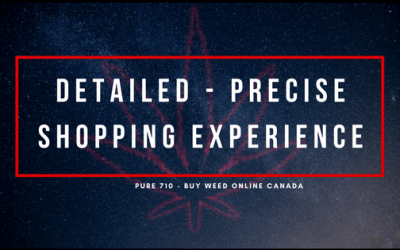 Detailed Precise Shopping Experience
