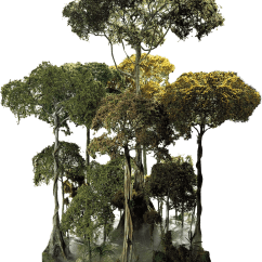 Forest Canopy Diagram Basic Automobile Wiring Layers Of The Rainforest Tropical Dk Find Out