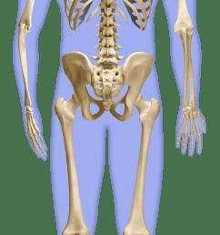 the skeleton l rd back skeleton g final flat slii12 [ 1440 x 3951 Pixel ]