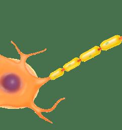 aw nerve impulse2 tcnrmm [ 1920 x 1144 Pixel ]