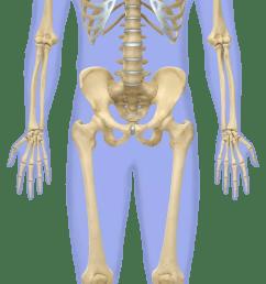 skeletal colour x4bf9v [ 640 x 1666 Pixel ]
