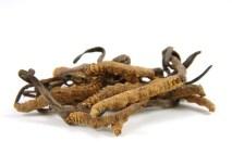 manfaat cordyceps untuk kesehatan pernafasan dari segi medis - alodokter