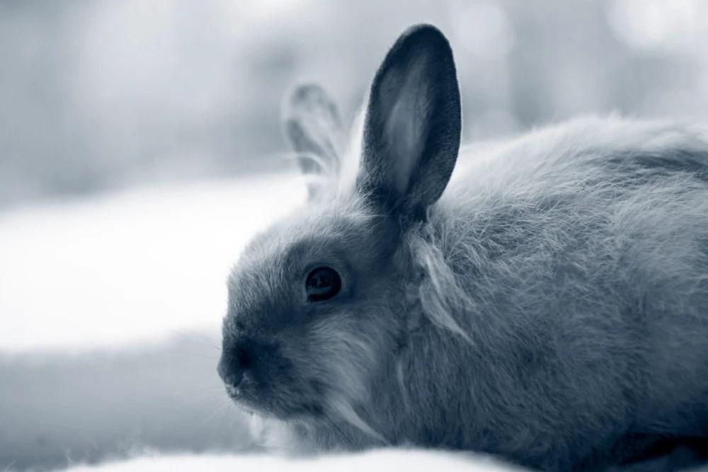 Magenüberladung beim Kaninchen | AniCura Deutschland