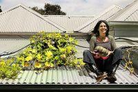 DIY  Rooftop Gardens