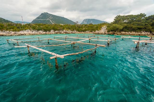 Oyster farming in Mali Ston