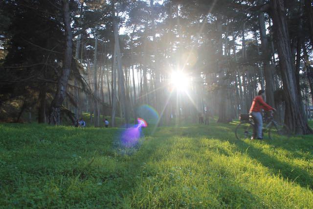 Presidio Forest SF8