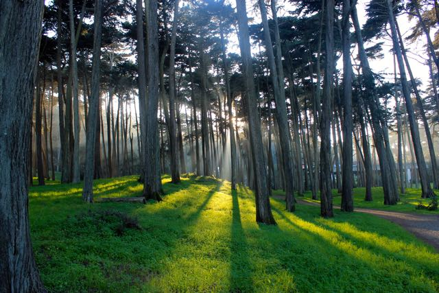 Presidio Forest SF2