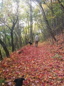 I love PA's fall foliage!