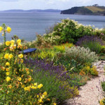 plants for coastal conditions
