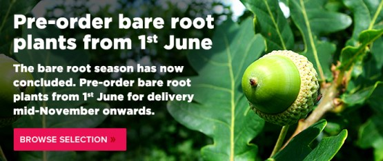 pre order bare root plants from 1 june 2015