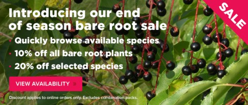 bare root hedging sale 2015