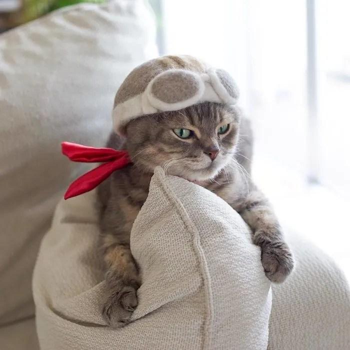 hipwee BntOb6WleF9 png  700 Kucing kucing Lucu dengan Topi dari Rontokan Bulu bulunya