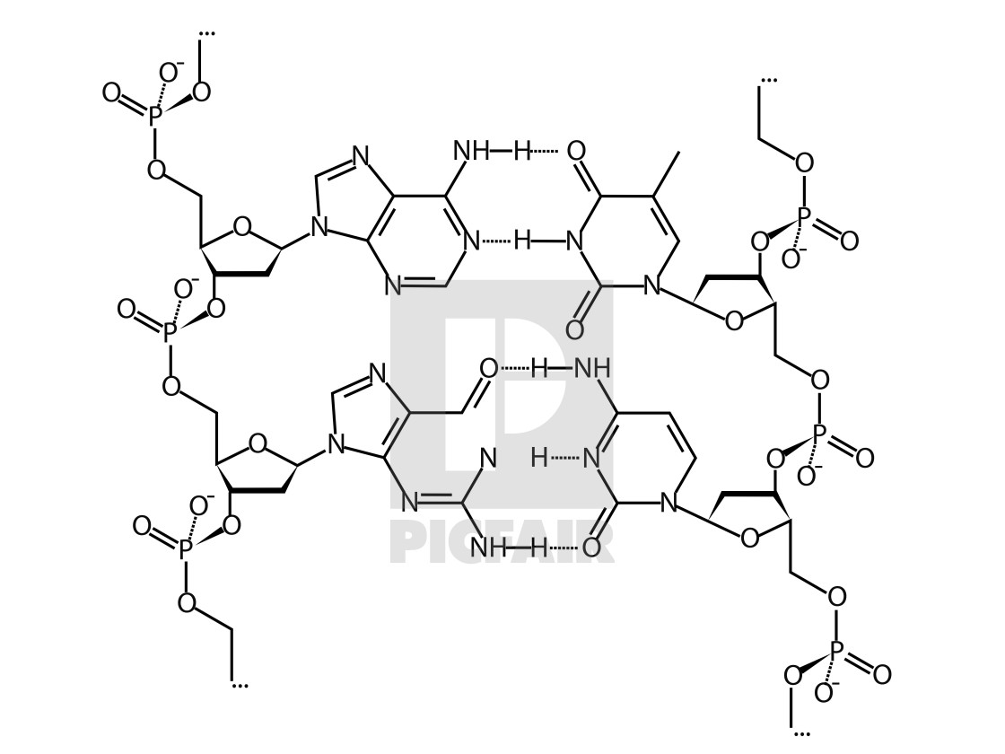 Dna Chemical Structure Formula