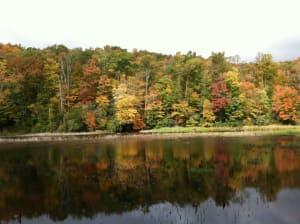 Fall Leaves NC
