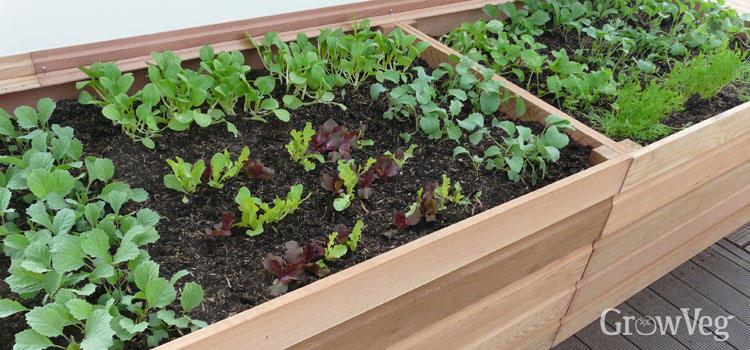 Best Vegetables Raised Beds