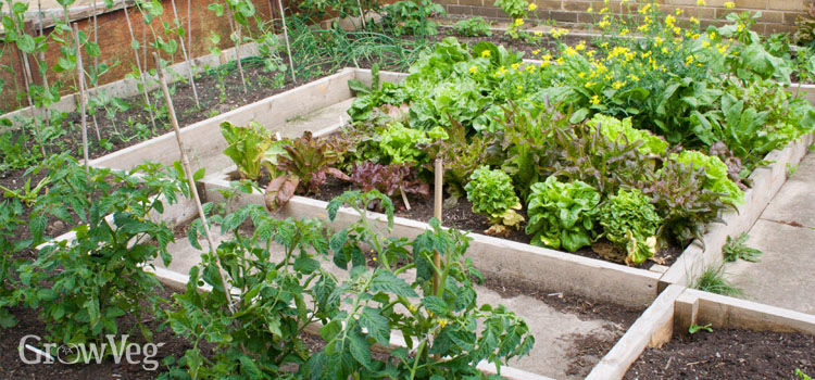 Image Result For What Soil To Use For Container Vegetable Gardens