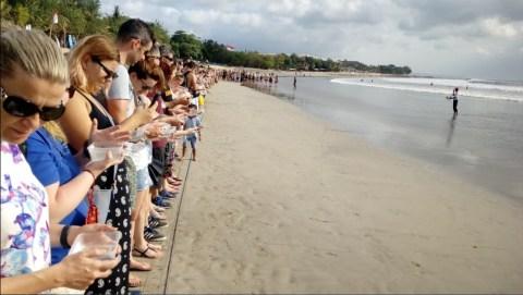 Melihat Penyu lucu di Bali Sea Turtle Society (BSTS)