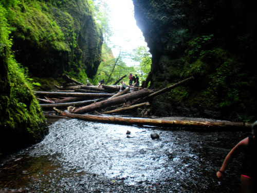 Oneonta gorge. The first challenge: climb over this pile of dead trees.