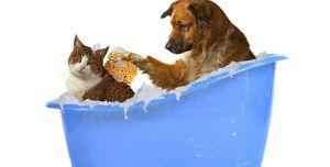 Dog cat bath