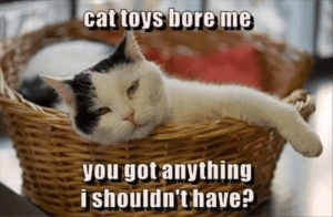 cat toys bore me