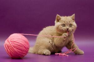 cat toy string