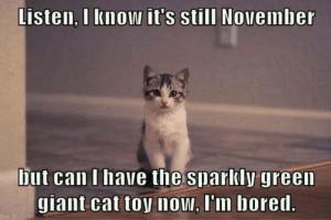 cat toy new