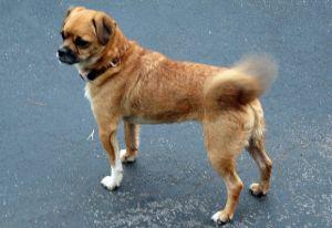 dog tail agitation annoyance