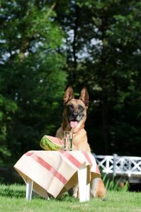 Dog Fruits and water